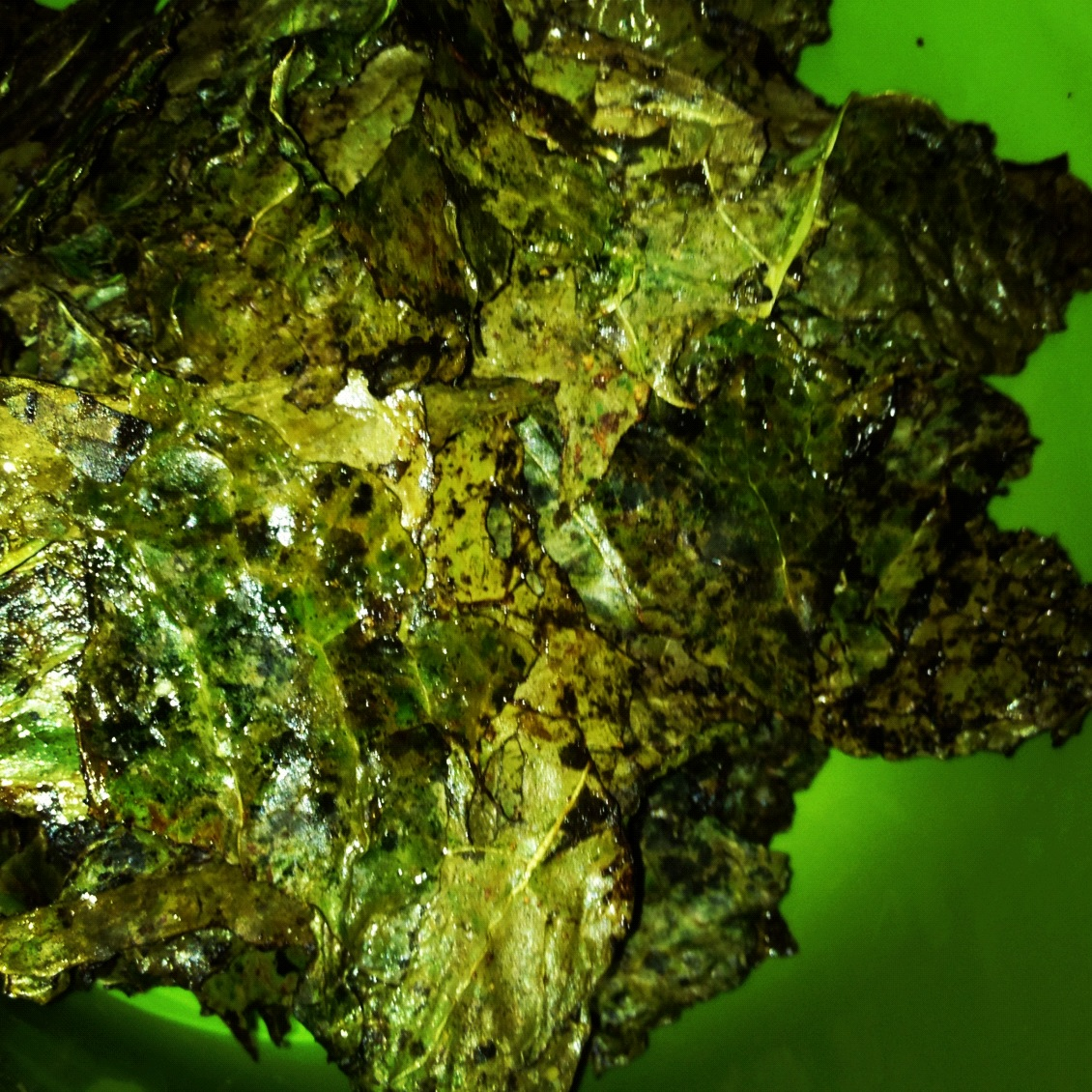 Baked Kale Chips with Sea Salt and Lemon